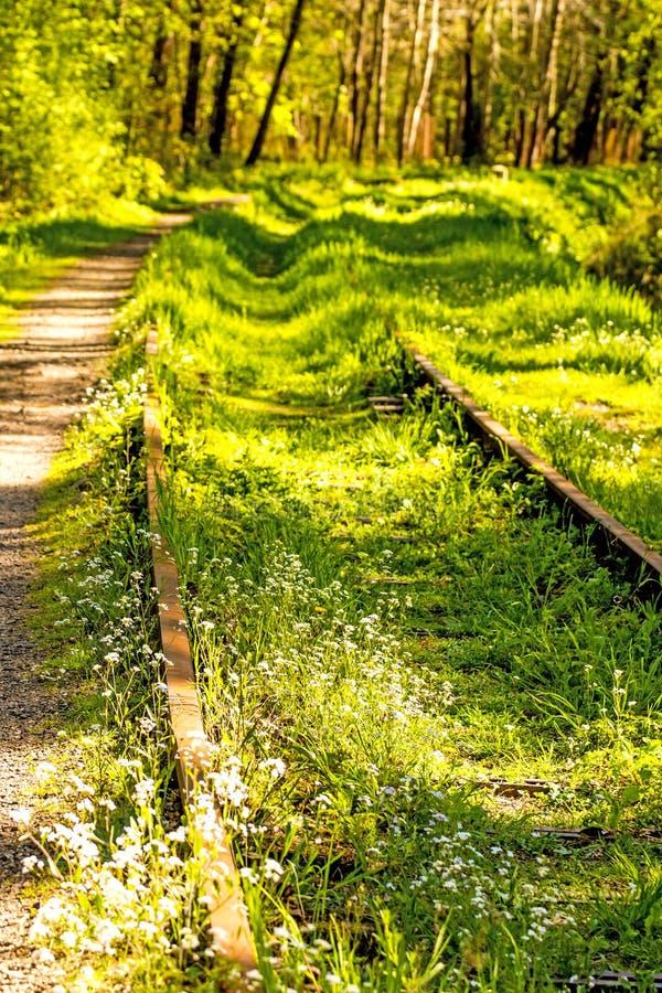 Poręcze przerastający z zieloną trawą obraz stock