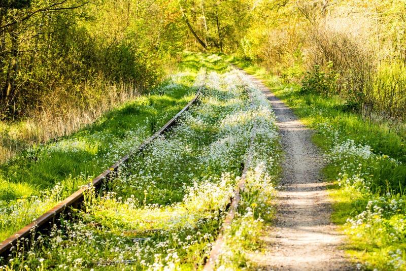 Poręcze przerastający z zieloną trawą i kwiatami fotografia stock
