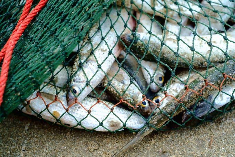 Por completo de los pescados de mar en red de pesca en la playa arenosa imágenes de archivo libres de regalías