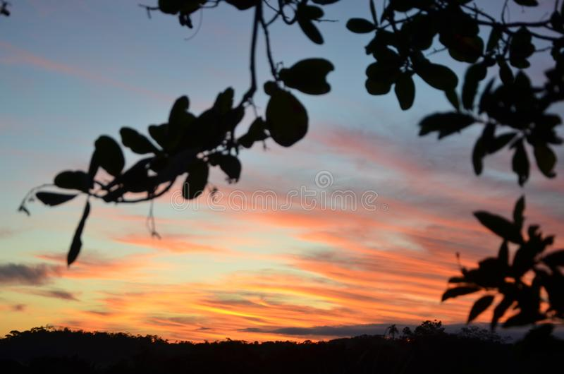 Por do sol, árvores fotos de stock royalty free