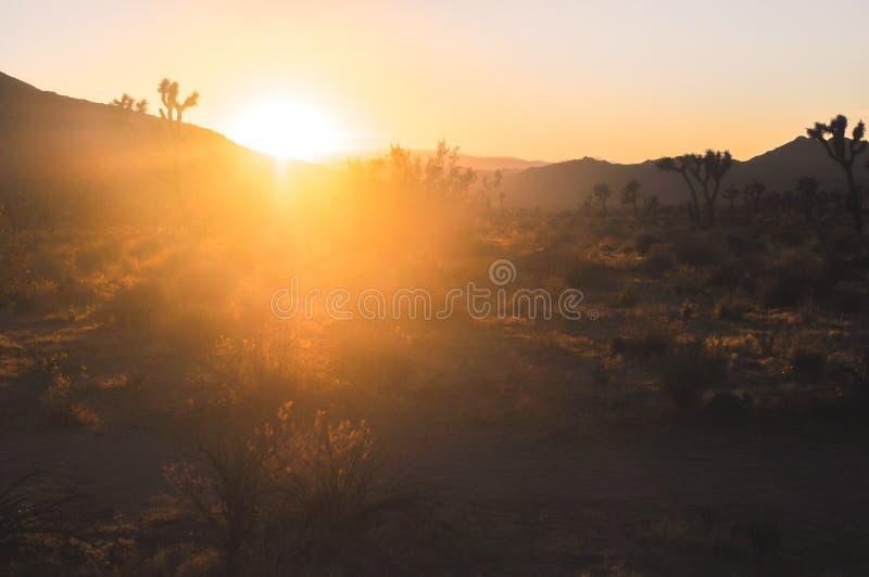 Por do sol épico bonito em natureza surpreendente do deserto de Joshua Tree Na foto de stock