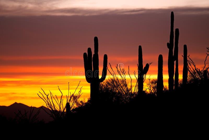 Download Por do sol imagem de stock. Imagem de flora, sunset, deserto - 16864655