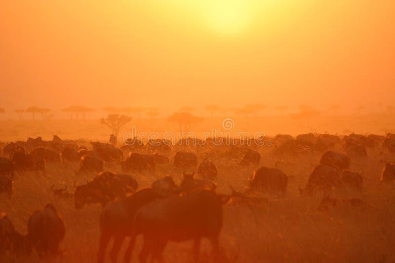 Por do sol 6.04 da migração fotografia de stock