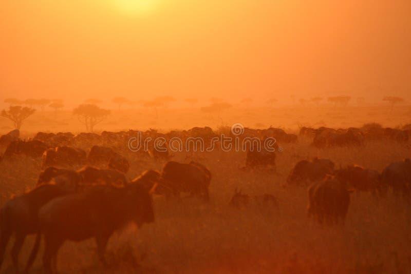 Por do sol 7.04 da migração imagem de stock