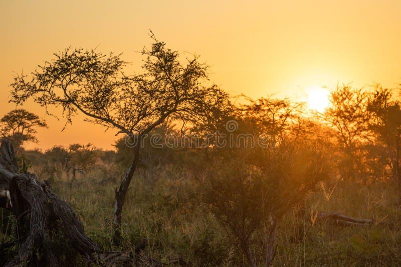 Por do sol africano ambiental do arbusto fotos de stock royalty free