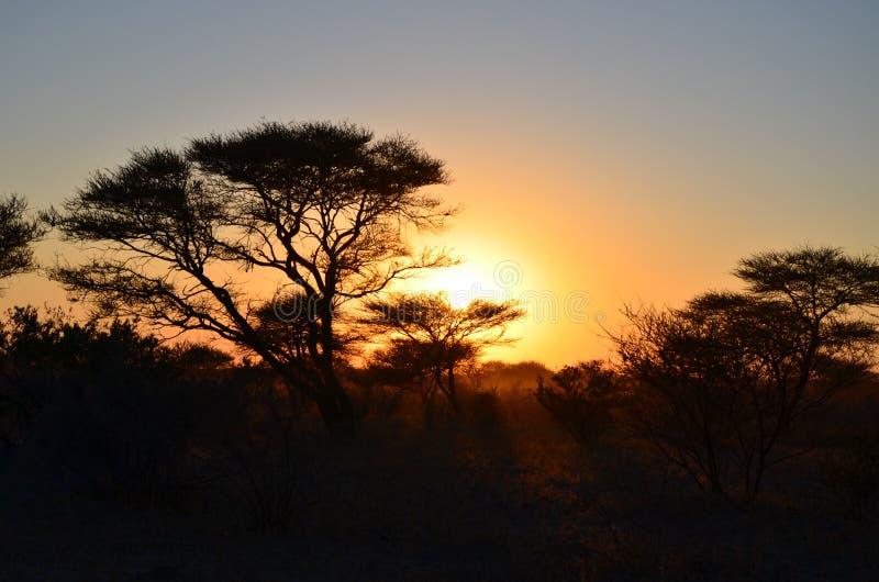 Por do sol africano do arbusto através das árvores fotos de stock