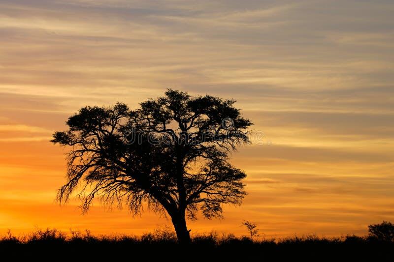 Por do sol africano com árvore mostrada em silhueta fotos de stock