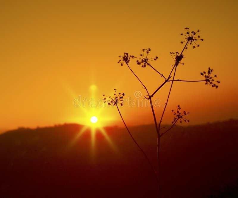Por do sol alaranjado foto de stock
