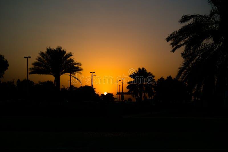 Por do sol alaranjado bonito que desvanece-se entre o cacho da palma em Abu Dhabi, UAE imagem de stock royalty free