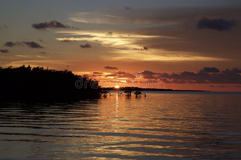 Por do sol alaranjado e cor-de-rosa que reflete na água com manguezais imagens de stock