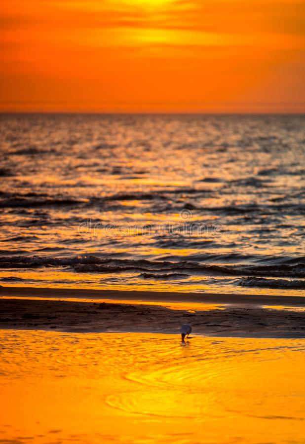 por do sol alaranjado vermelho pelo mar e pelo pássaro imagem de stock royalty free