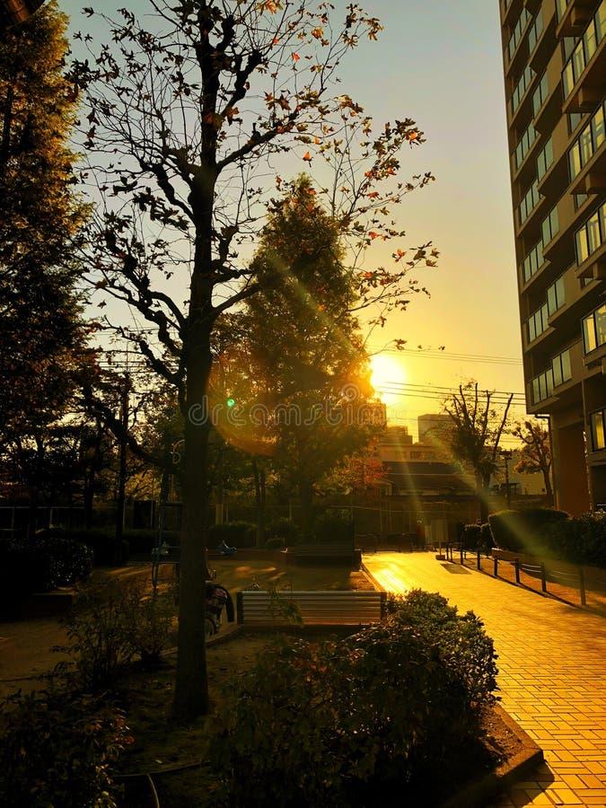 Por do sol atrás da árvore foto de stock royalty free