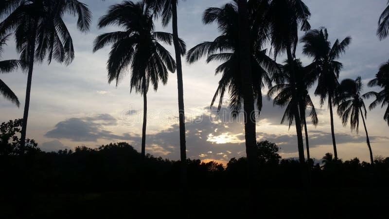 Por do sol atrás das árvores de coco imagem de stock