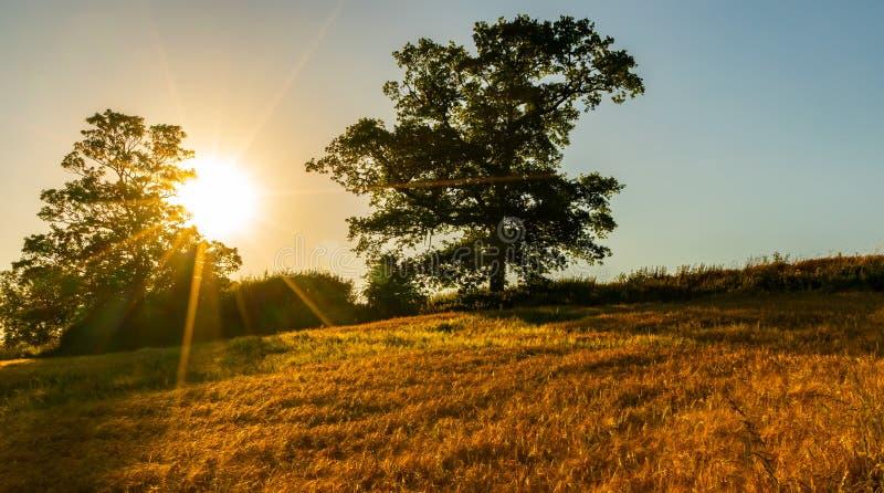 Por do sol atrás das árvores e do campo de trigo fotos de stock