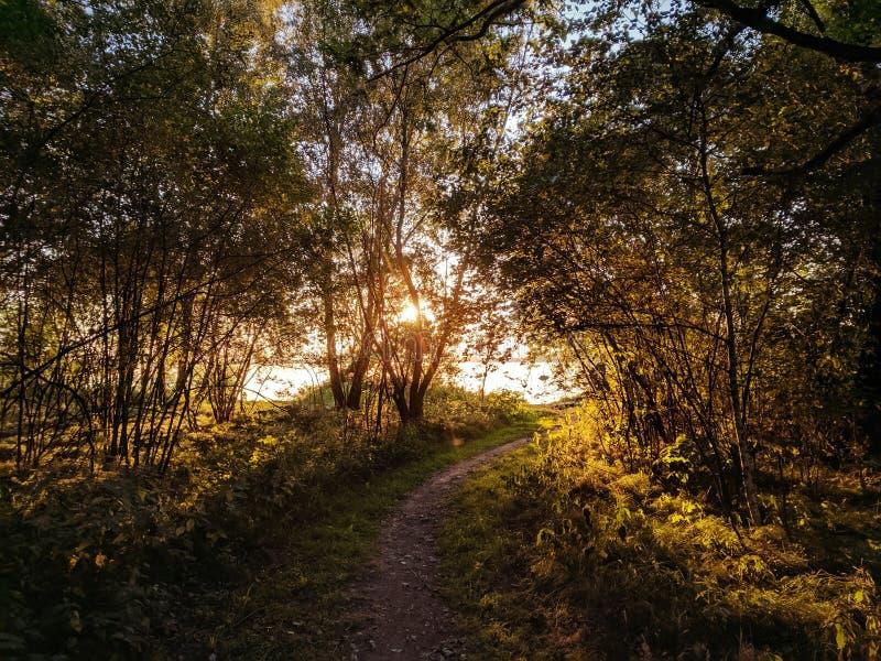Por do sol atrás das árvores no lago imagem de stock royalty free