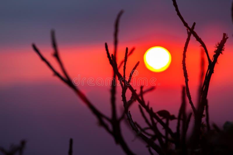 Por do sol atrás das varas fotos de stock