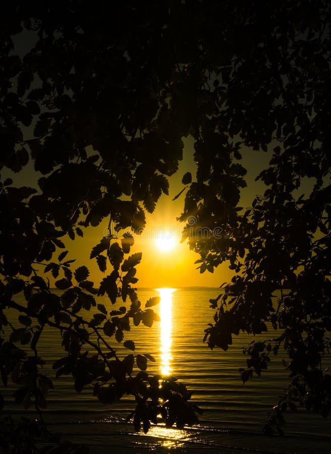 Por do sol atrás de uma árvore imagem de stock royalty free