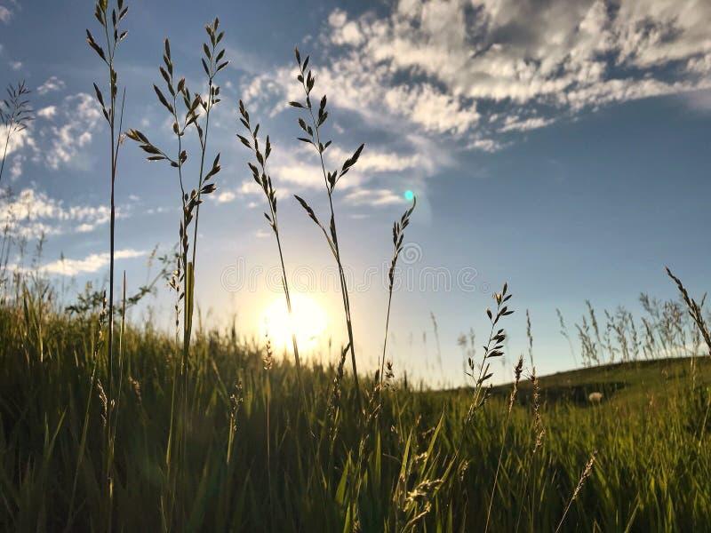 Por do sol atrás do monte da grama imagens de stock royalty free