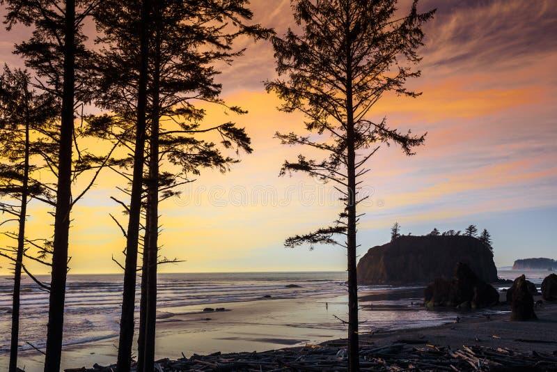 Por do sol através das árvores, Ruby Beach imagens de stock royalty free