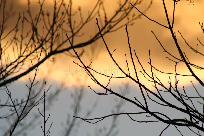 Por do sol através dos ramos foto de stock royalty free
