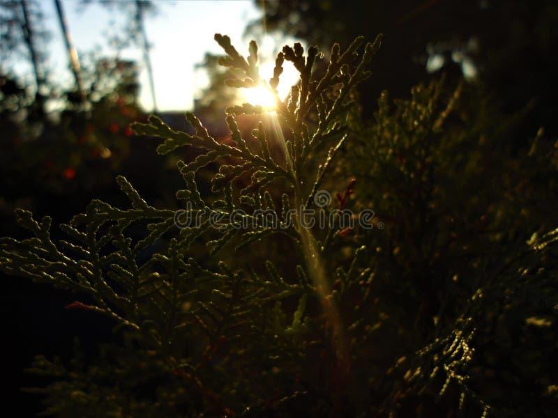 Por do sol bonito atrás da folha de uma planta imagens de stock