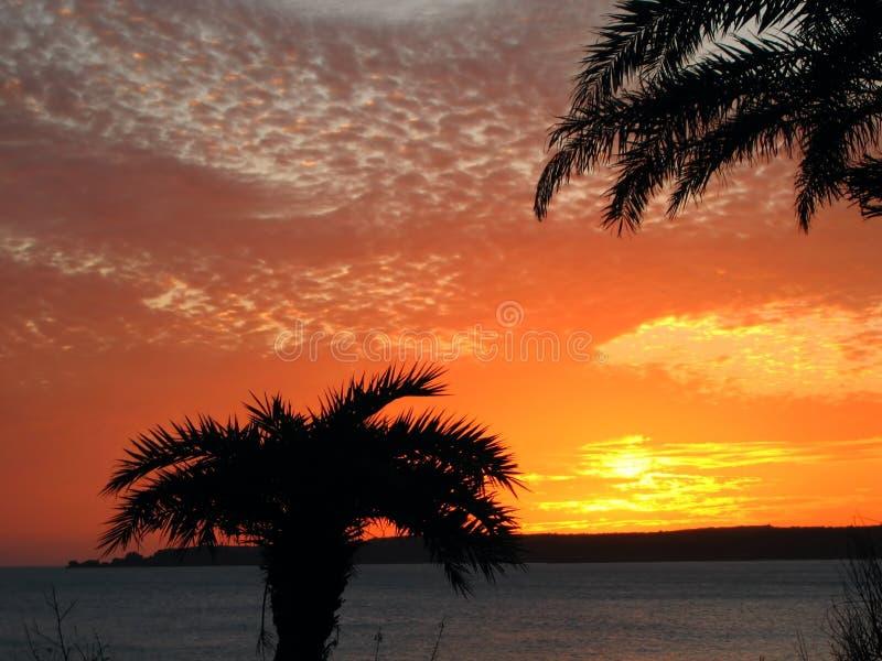 Por do sol bonito com palmeiras imagem de stock