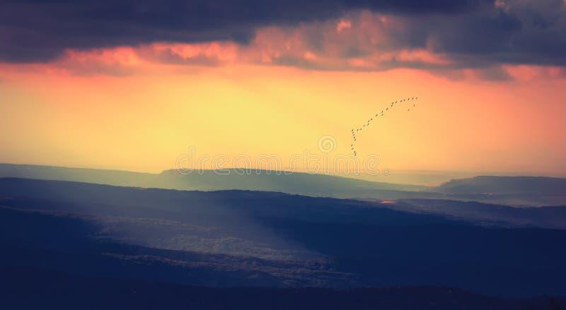 Por do sol bonito com um rebanho do birds_vintage fotos de stock royalty free