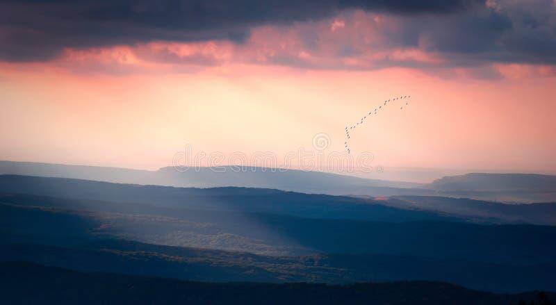Por do sol bonito com um rebanho dos pássaros fotos de stock royalty free