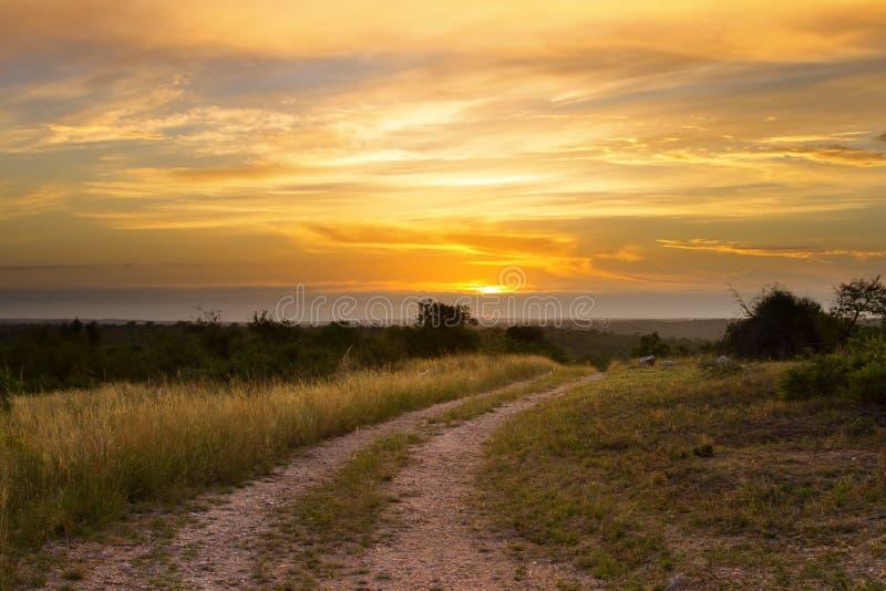 Por do sol bonito do grasland com a estrada de terra após a árvore e o colou brilhante foto de stock royalty free