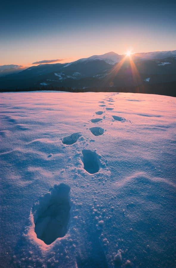 Por do sol bonito do inverno no montanhas Carpathian fotos de stock royalty free