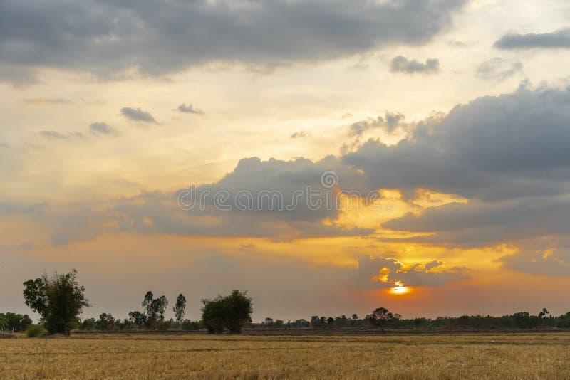 Por do sol bonito dourado claro em campos de grama seca e na árvore de bambu no campo na noite imagem de stock