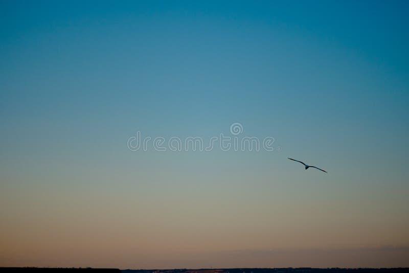 Por do sol bonito em Haia Noite em Scheveningen imagem de stock