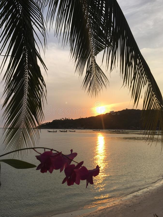 Por do sol bonito na praia de Chalok Baan Kao em Koh Tao foto de stock royalty free