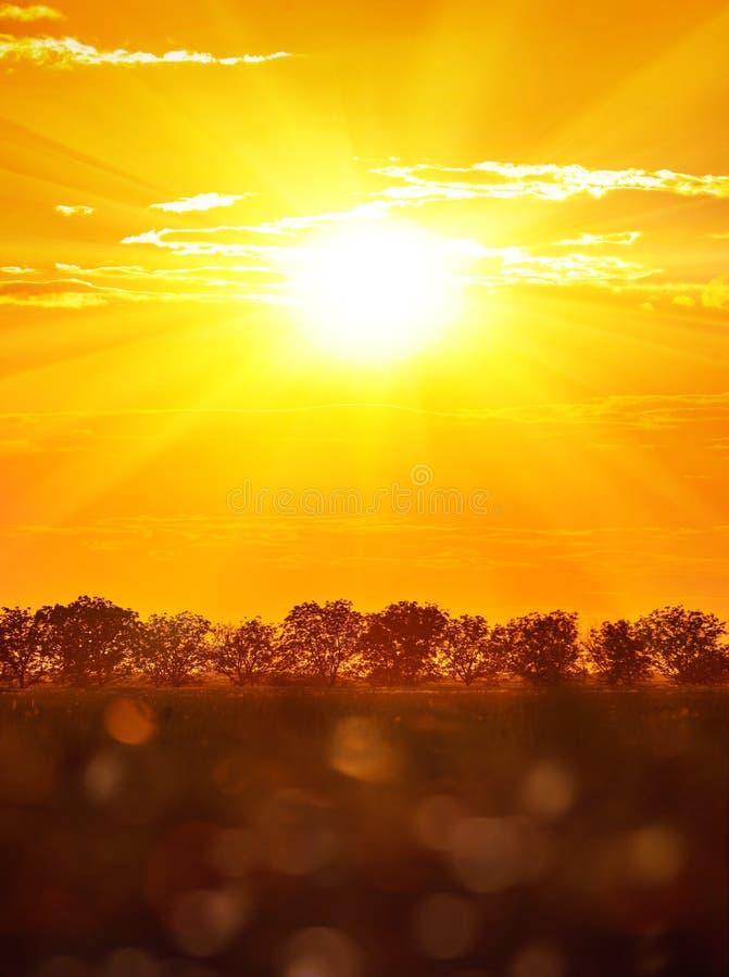 Por do sol bonito no campo do verão, paisagem selvagem Sol grande no céu nebuloso As árvores mostram em silhueta e gramam imagens de stock royalty free