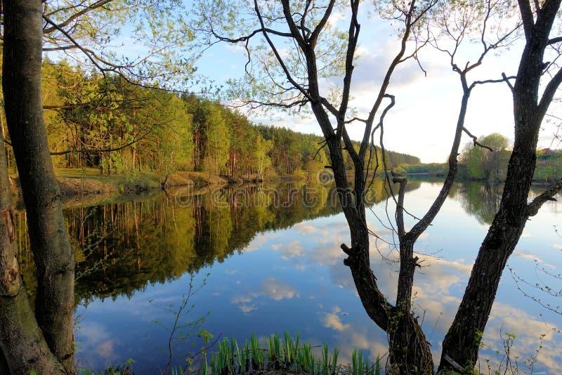 Por do sol bonito no lago da floresta Nuvens refletidas na ?gua imagem de stock royalty free