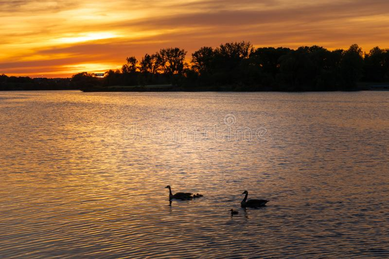 Por do sol bonito no rio com gooses fotos de stock royalty free