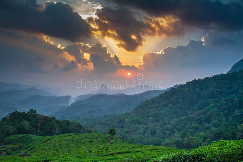Por do sol bonito sobre a plantação de chá verde em Munnar imagem de stock