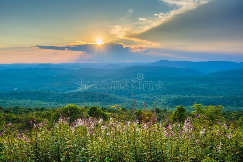Por do sol do bot?o do abeto vermelho, na floresta nacional de Monongahela, West Virginia imagens de stock royalty free