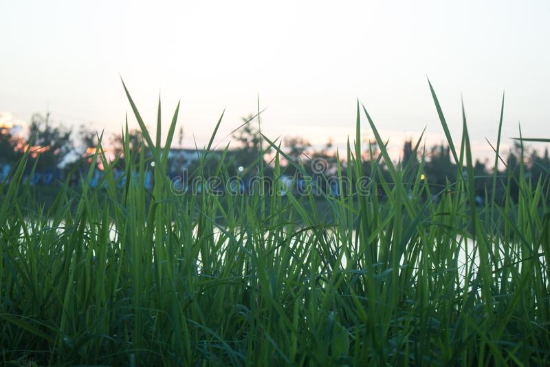 Por do sol brilhante sobre o campo de grama verde foto de stock royalty free