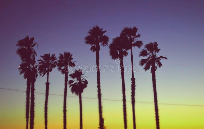 Por do sol californiano com palmeiras fotografia de stock