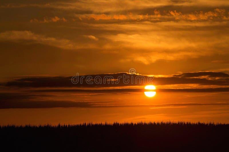 Por do sol do campo de milho fotografia de stock