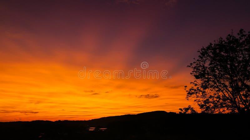 Por do sol colorido com uma árvore ao lado foto de stock royalty free