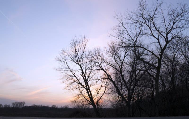 Por do sol colorido e árvores imagem de stock