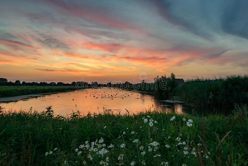 Por do sol colorido sobre um lago na Holanda com as flores no primeiro plano fotografia de stock royalty free