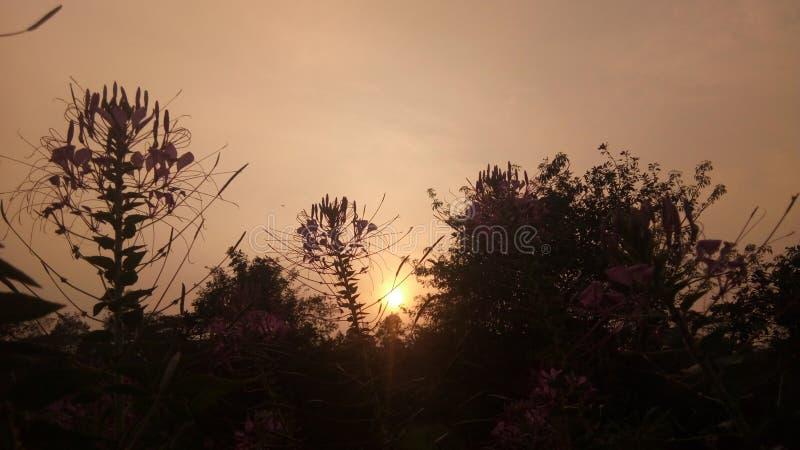Por do sol com flores fotografia de stock