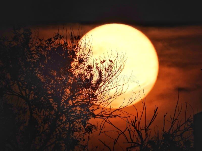 Por do sol com sol grande fotografia de stock