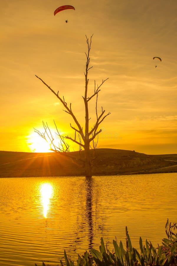 Por do sol com a laranja da árvore e do paraglider foto de stock