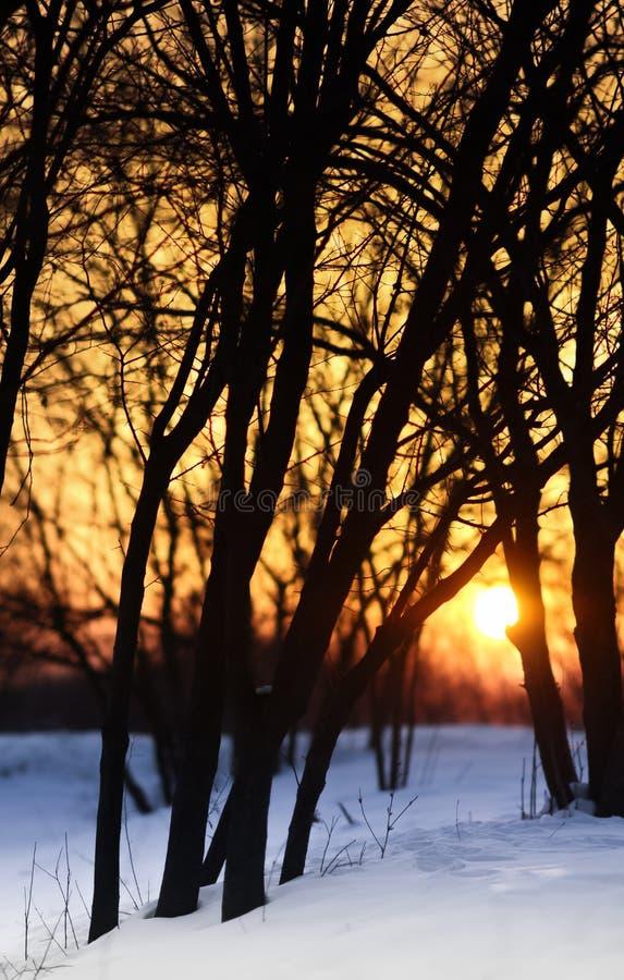 Por do sol com neve imagens de stock