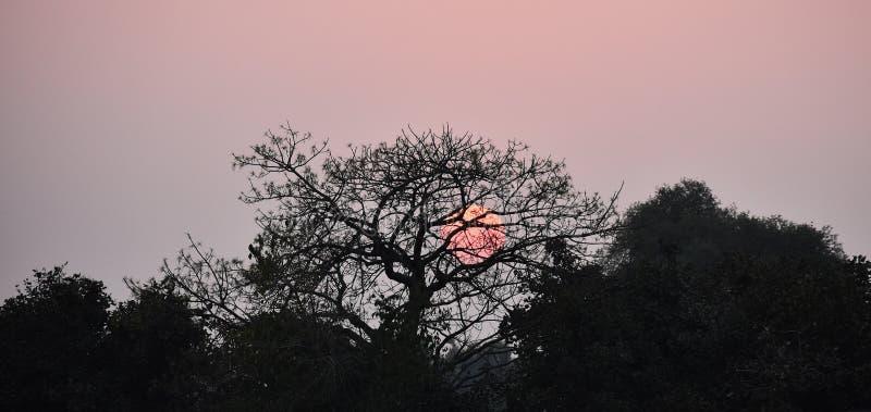 Por do sol com o céu vermelho na área da floresta fotos de stock