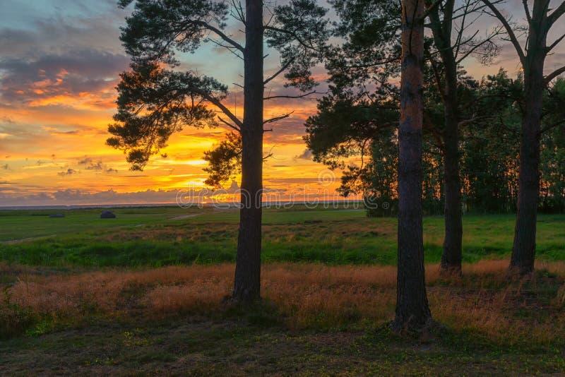 Por do sol com os pinhos no Báltico fotografia de stock royalty free